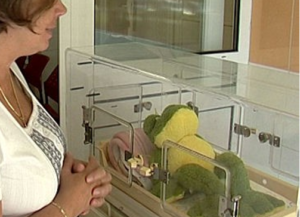 Inkubátor